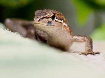 カナヘビ (1).jpg