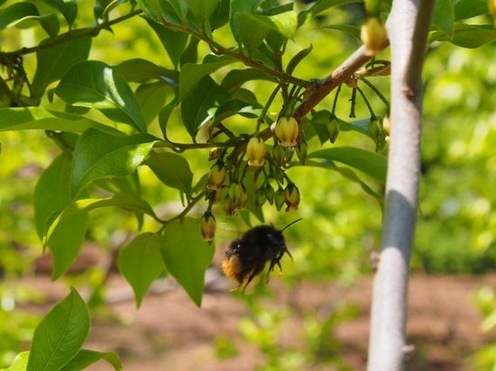 ミツバチ (2).jpg