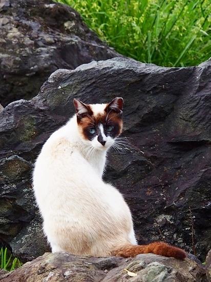 公園の猫 (1).jpg