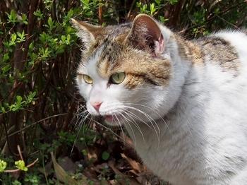 公園猫 (4).jpg