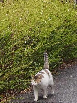 公園猫 (5).jpg