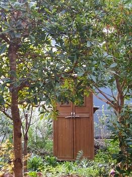 山桃の木と花 (2).jpg