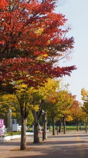 欅の紅葉.jpg