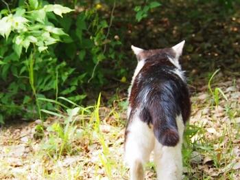 水元の猫.jpg