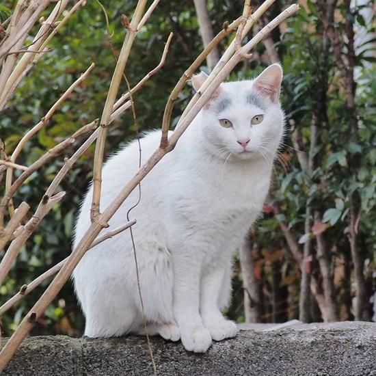江戸川の猫.jpg