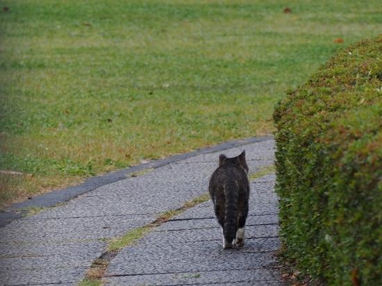 猫 (1).jpg