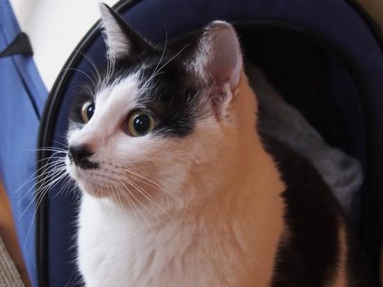 猫・おいもちゃん (1).jpg