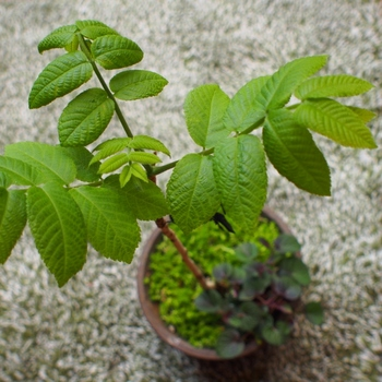 盆栽 (2).jpg