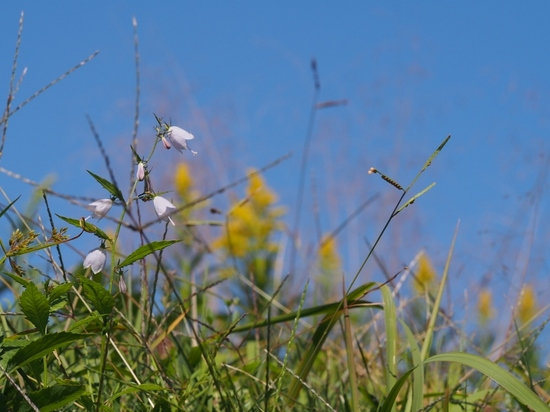秋の野草.jpg