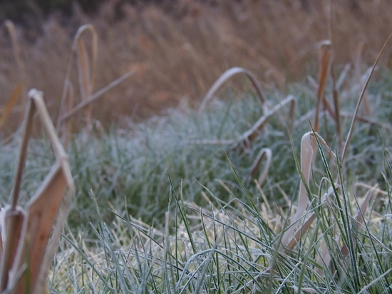 草に霜.jpg