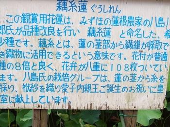 説明書き・蓮.jpg