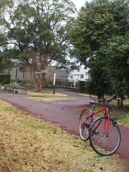 赤い自転車と椿.jpg
