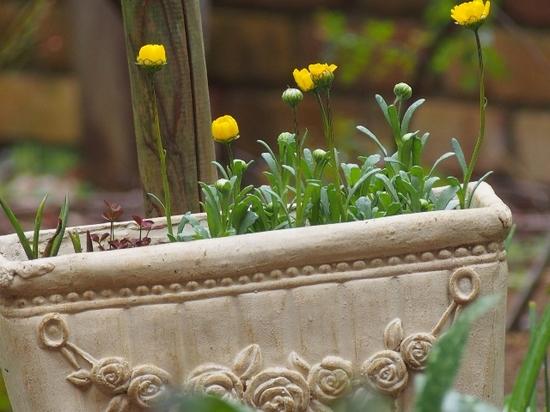 雨の日の植物 (1).jpg