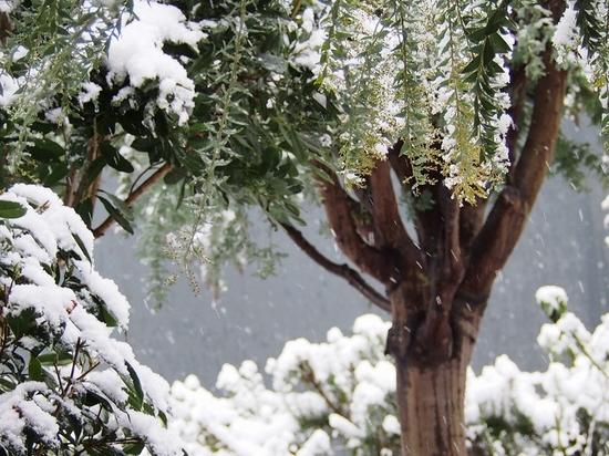 雪とスズメ.jpg