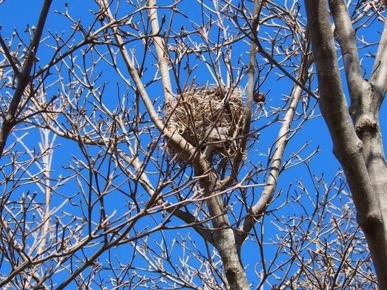 鳥の巣.jpg