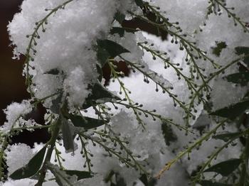 11月の雪 (4).jpg