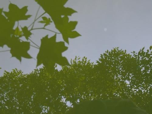 池に映った空と葉の色