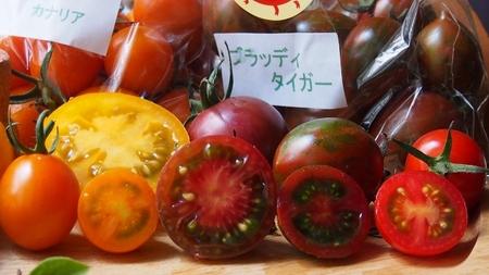 トマトいろいろ