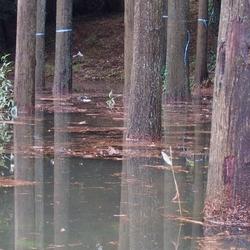 水につかった木