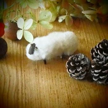 綿のヒツジ