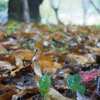 雨の日の森