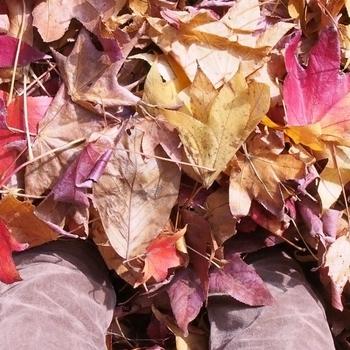 落ち葉に埋もれた足