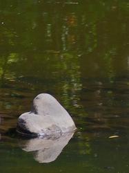 ハートの石.jpg