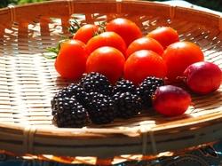 フルーツトマトとブラックベリー収穫.jpg