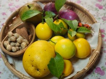 レモン収穫.jpg
