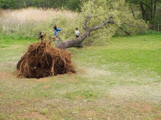 倒れた木と子供たち (640x480).jpg