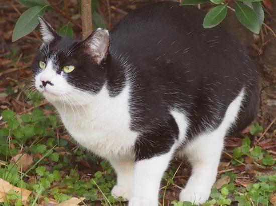 公園の猫 (2).jpg
