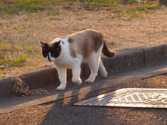 公園の猫 (4).jpg