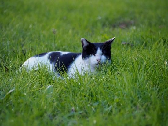 公園猫.jpg
