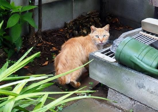 猫・トラちゃん.jpg
