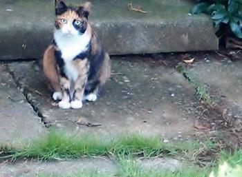 猫・新顔.jpg