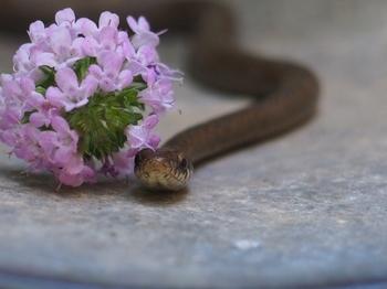 蛇の赤ちゃん (2).jpg