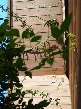 蜂の巣.jpg