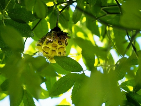 蜂の巣・白木香のアーチ.jpg