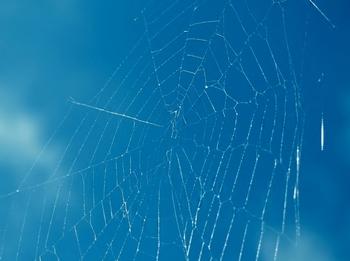 蜘蛛の糸.jpg