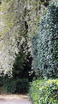 曇りの日に、散りゆく桜